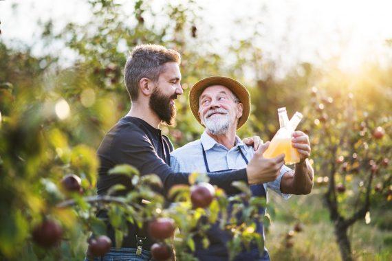 mężczyźni w sadzie jabłek