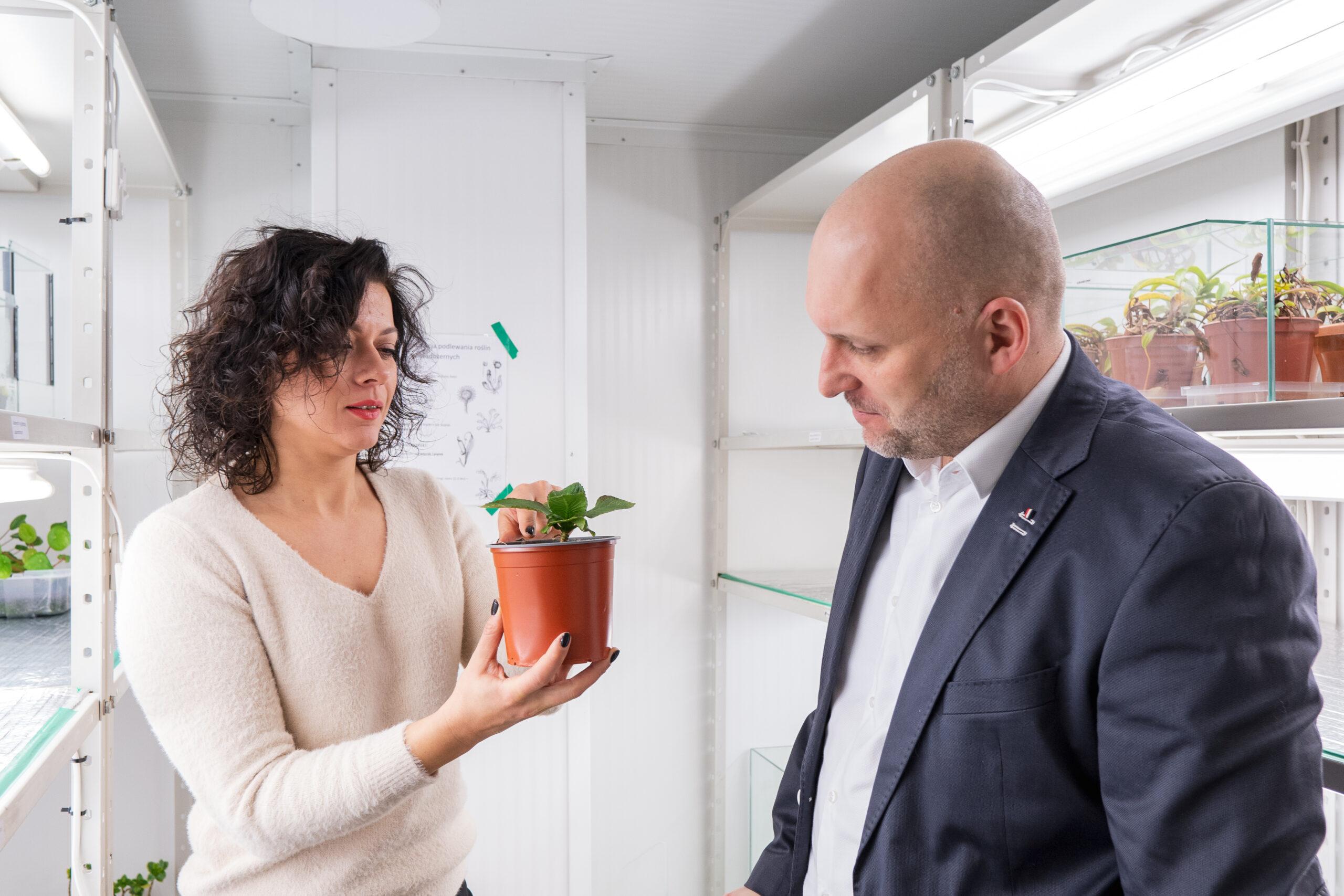 pracownicy innovatree obserwujący roślinę