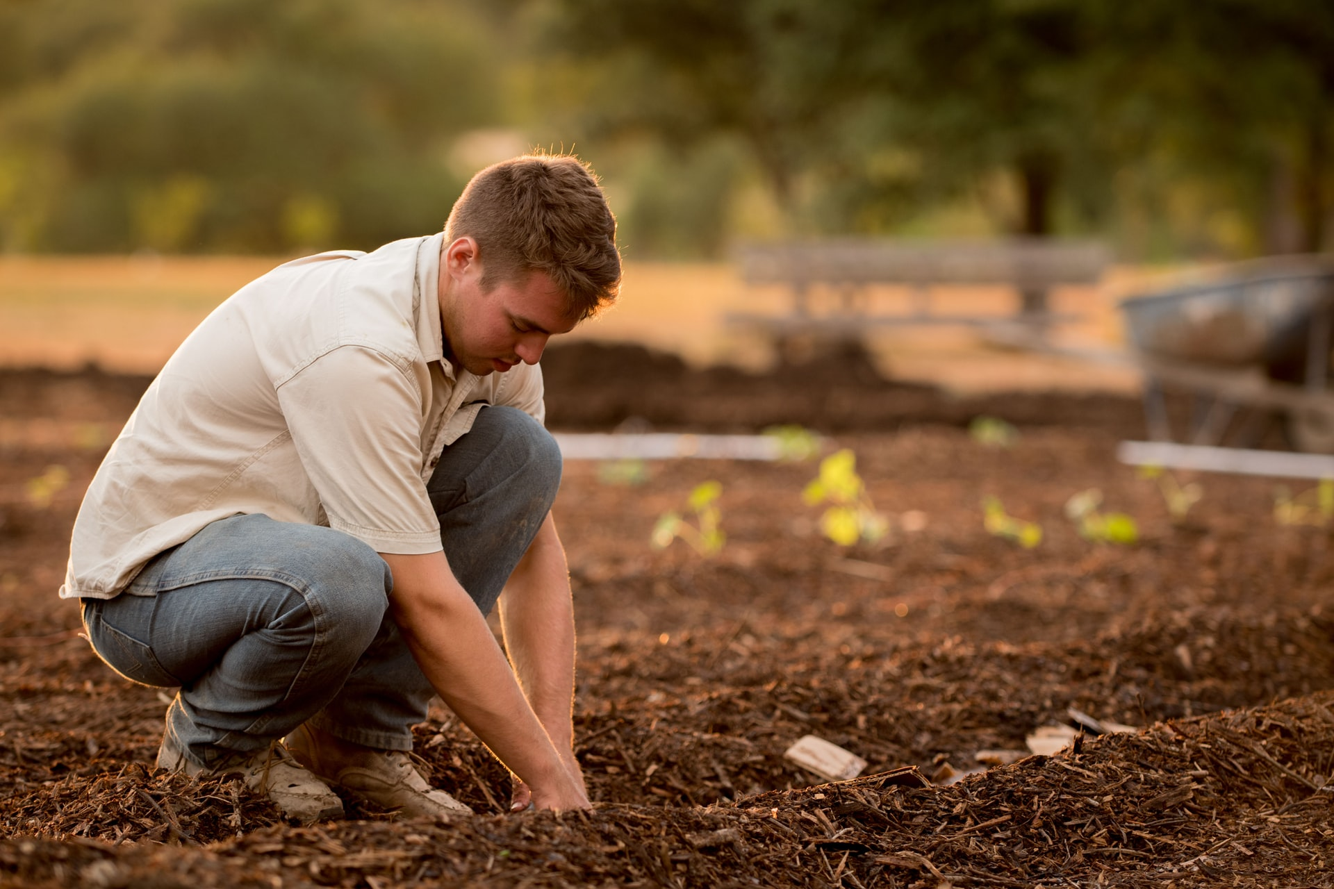 mężczyzna sadzący nasiona pomidorów w ziemi